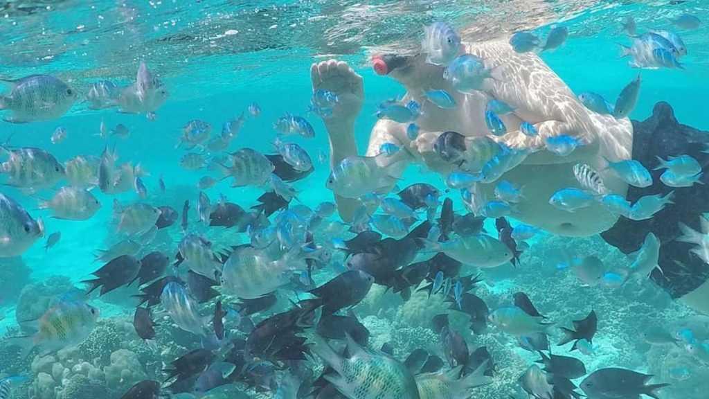 Berenang Snorkeling Diving Pantai Bara
